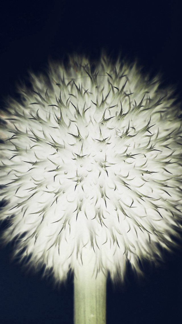 Ball Dandelion Flower Circle Nature Dark iPhone 8 wallpaper