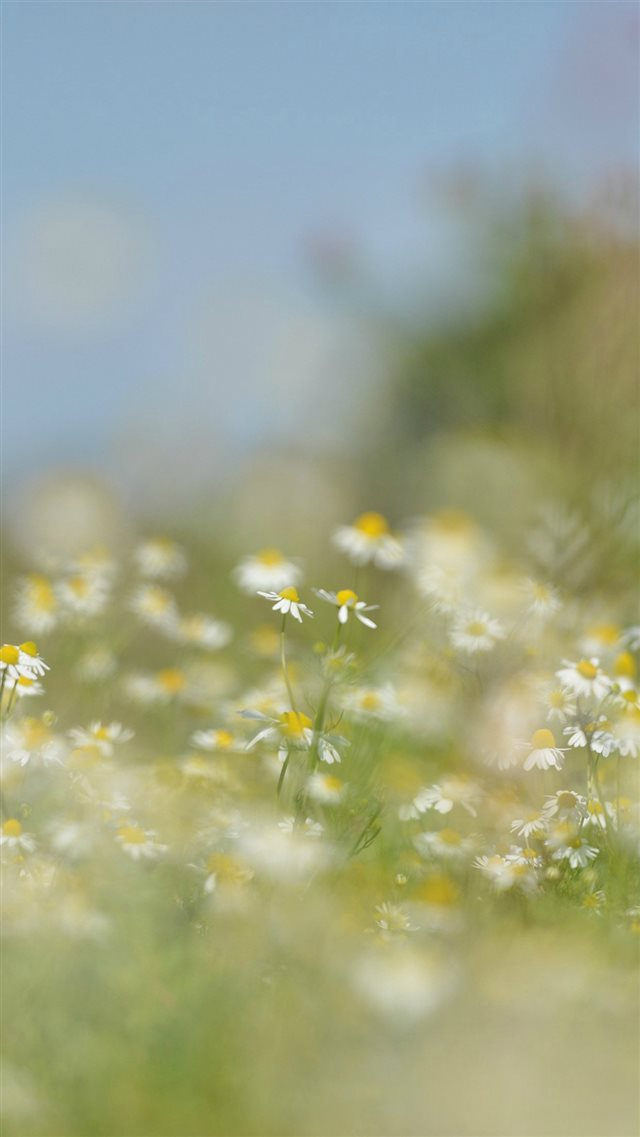 Flower Bokeh White Spring Nature iPhone 8 wallpaper