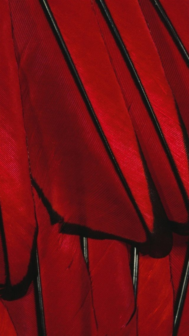 Black Red Paint Color Feather iPhone 8 wallpaper