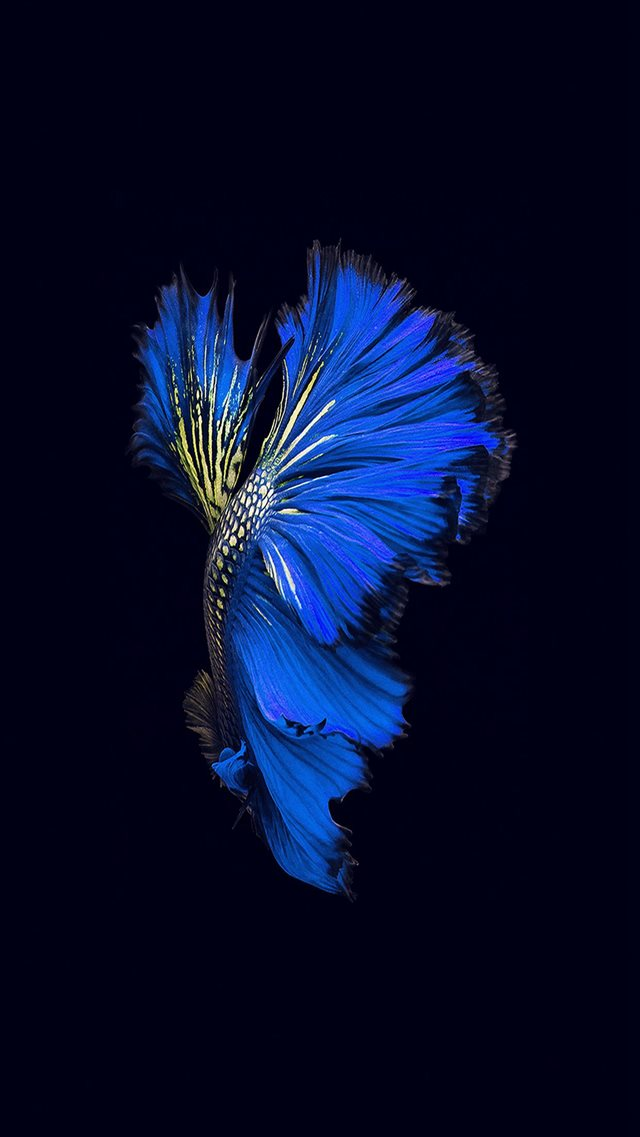 Apple Ios9 Fish Live Background Dark Blue iPhone 8 wallpaper
