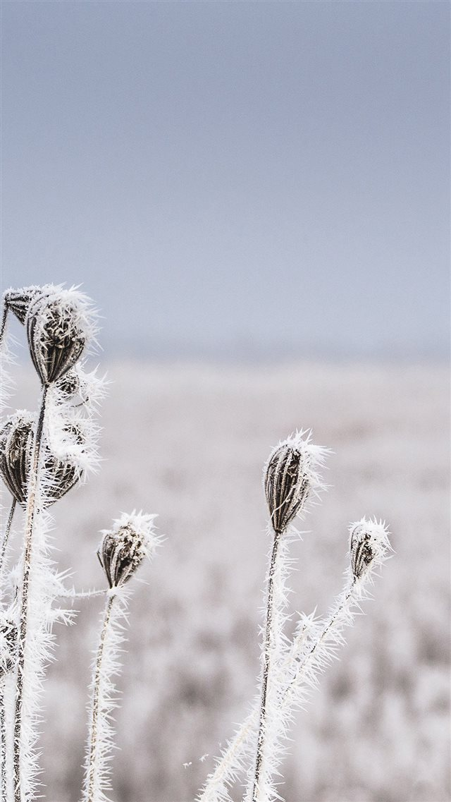 Snow Winter Flower Bokeh Nature iPhone 8 wallpaper