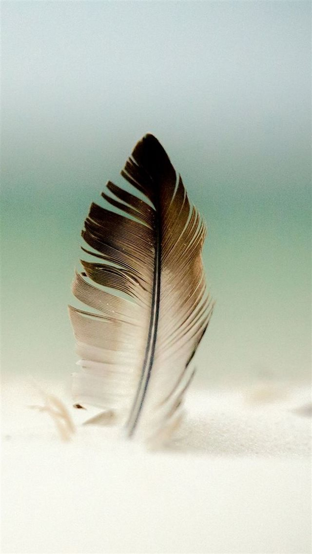 Feather In Sand  iPhone 8 wallpaper