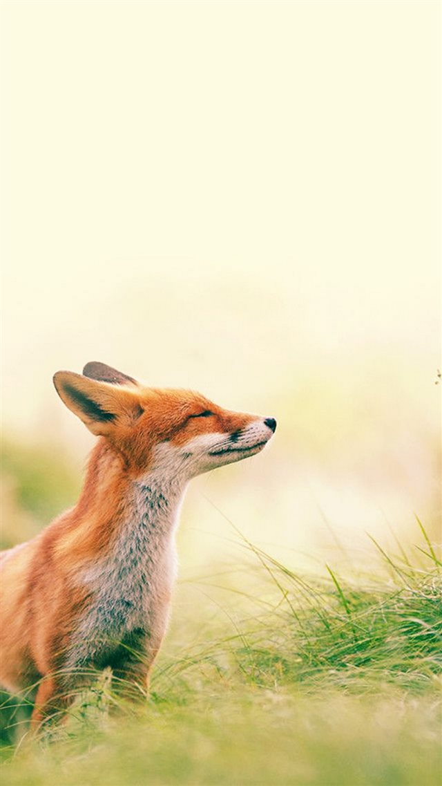 Fox Scenting Breeze iPhone 8 wallpaper