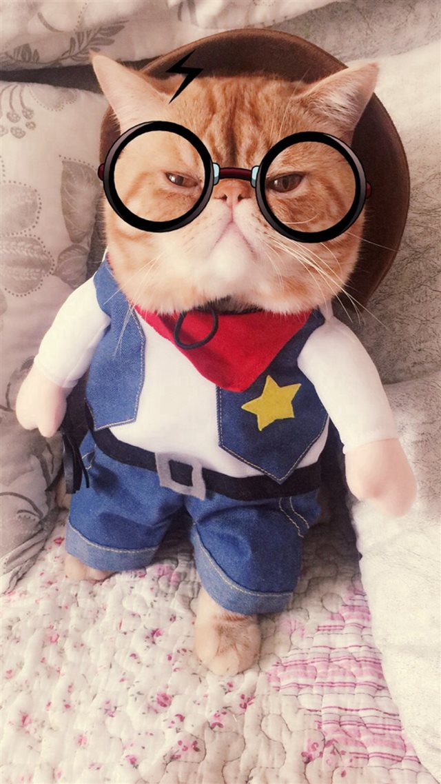 Cute Creative Cat Funny Animal IPhone 8 Wallpaper