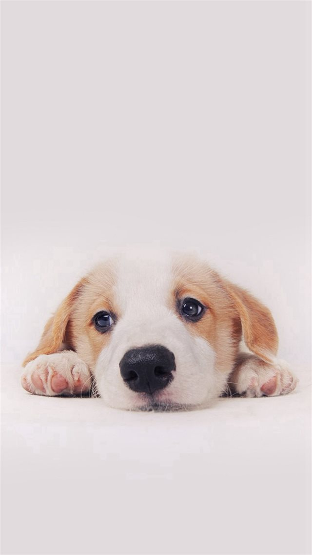 Cute Puppy Dog Pet iPhone 8 wallpaper