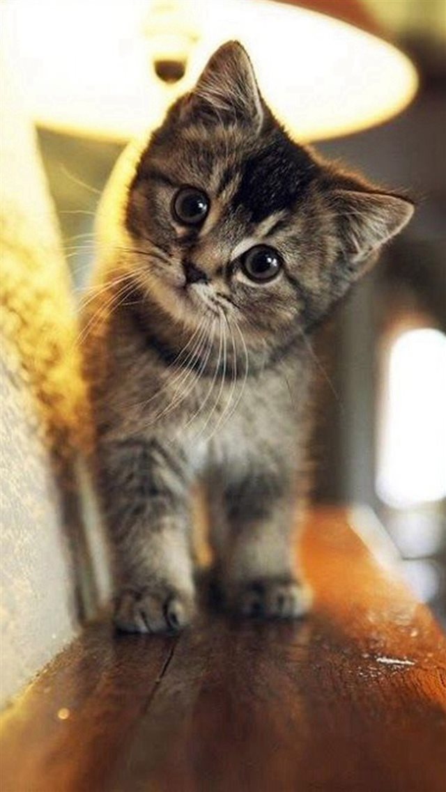 Cute Stare At Cat Animal iPhone 8 wallpaper