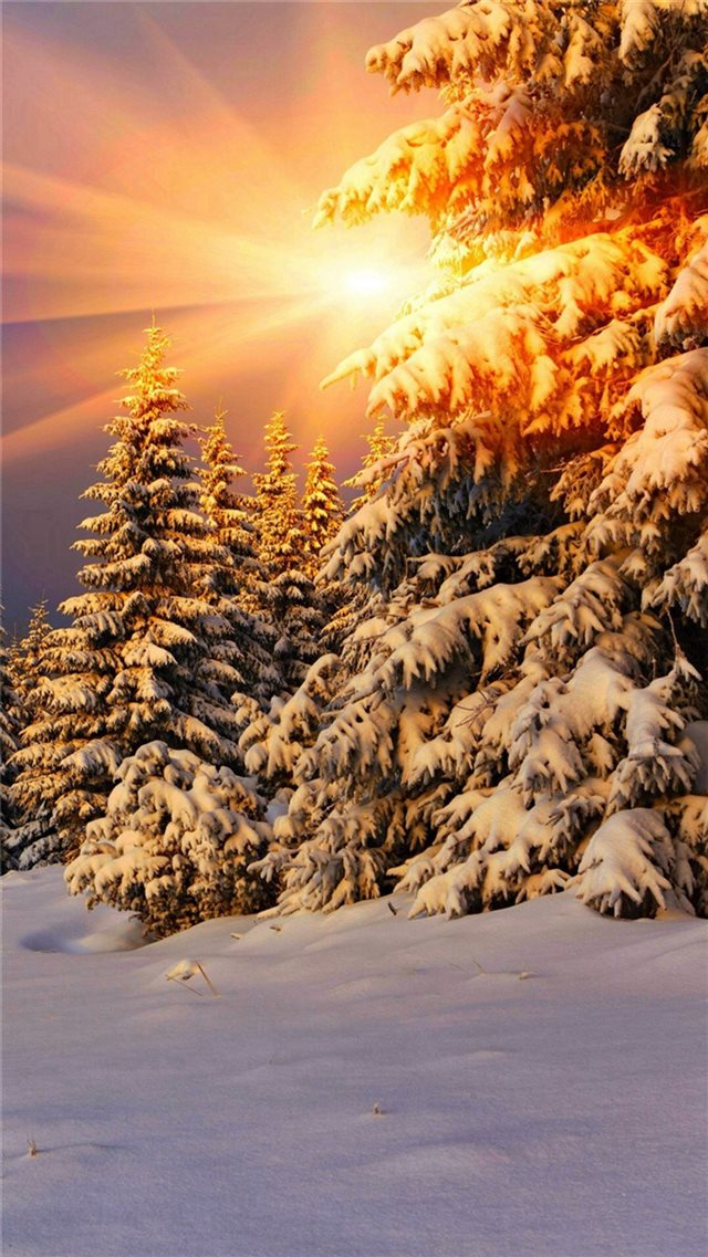 Snowy Pine Trees Sunshine iPhone 8 wallpaper