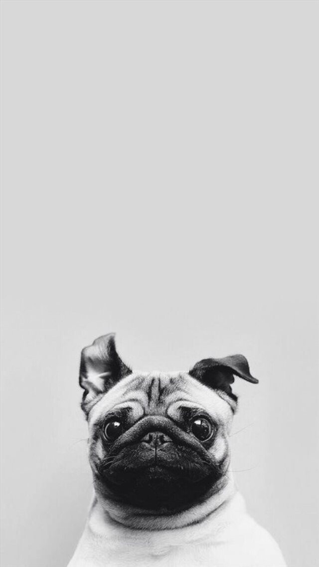Funny Puppy Dog Simple Macro iPhone 8 wallpaper
