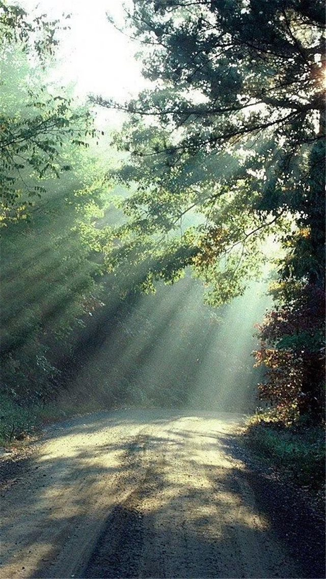 Nature Forest Sunlight Trees Road iPhone 8 wallpaper