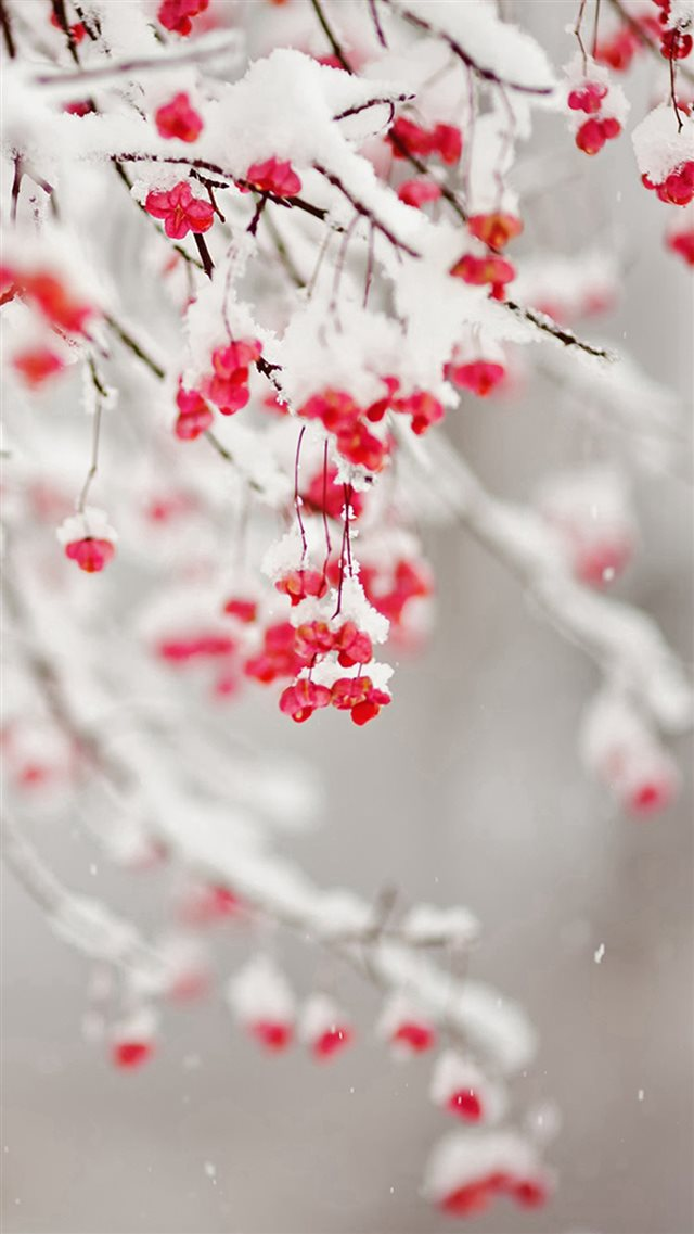 Winter Snowy Pure Icy Fruit Branch iPhone 8 wallpaper