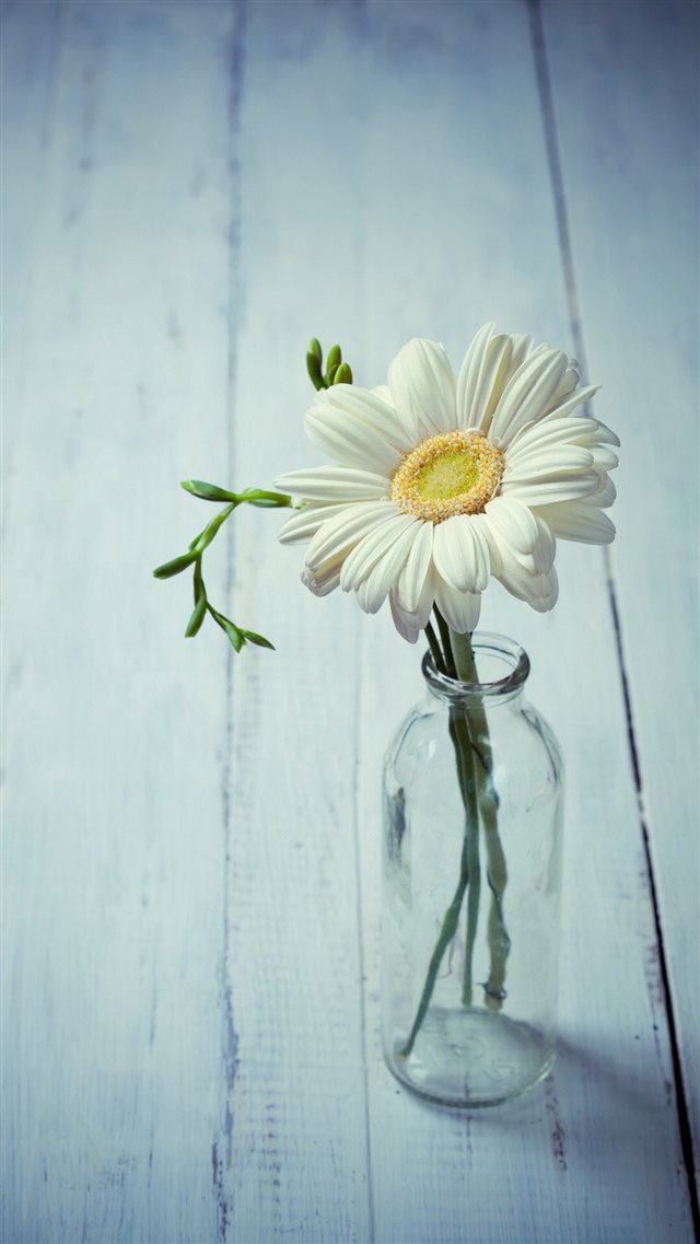 Aesthetic Beauty Daisy Vase iPhone 8 wallpaper