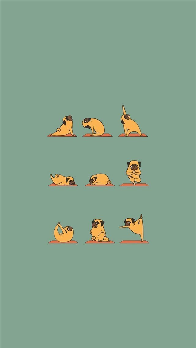 Funny Pug Doing Yoga  iPhone 8 wallpaper