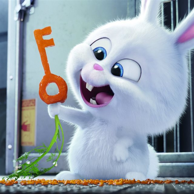 The Secret Life Of Pets 2016 Rabbit Snowball iPad wallpaper