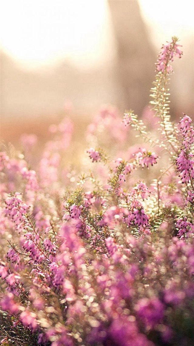 Nature Spring Bloomy Flowers Blurry iPhone 8 wallpaper