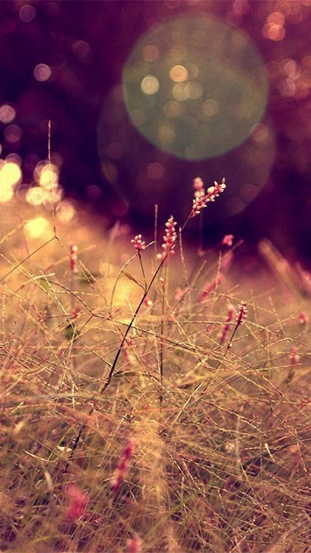 Nature Grass Lawn Flare Scenery iPhone 8 wallpaper