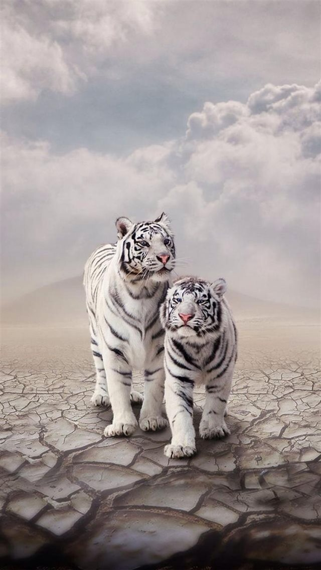 Drought Sandy Clouds White Tiger Cp iPhone 8 wallpaper