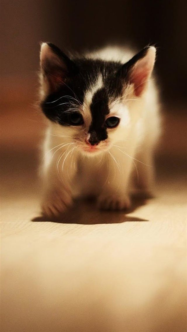 Cute Walking Speckle Little Kitten Cat iPhone 8 wallpaper