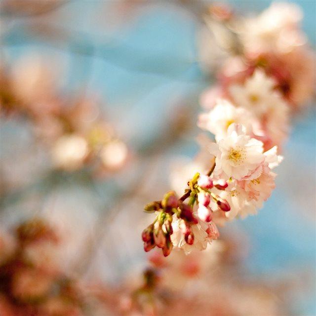 Springtime Iphone Wallpaper