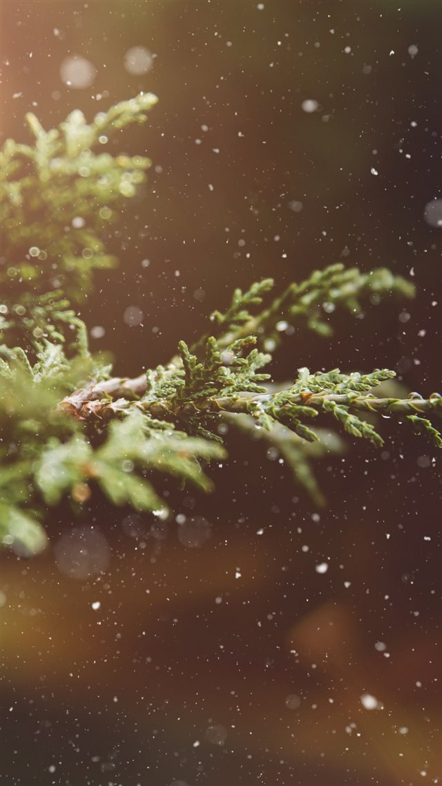 Branches Snow Glare iPhone 8 wallpaper