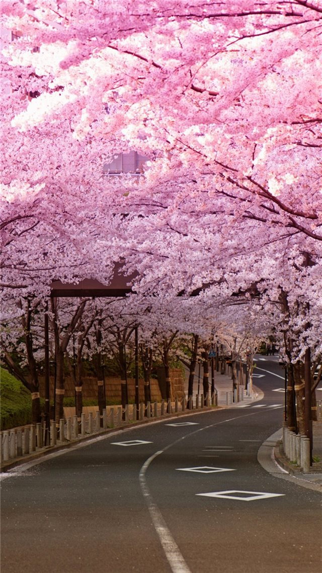 Bright Cherry Blossom Road iPhone 8 wallpaper