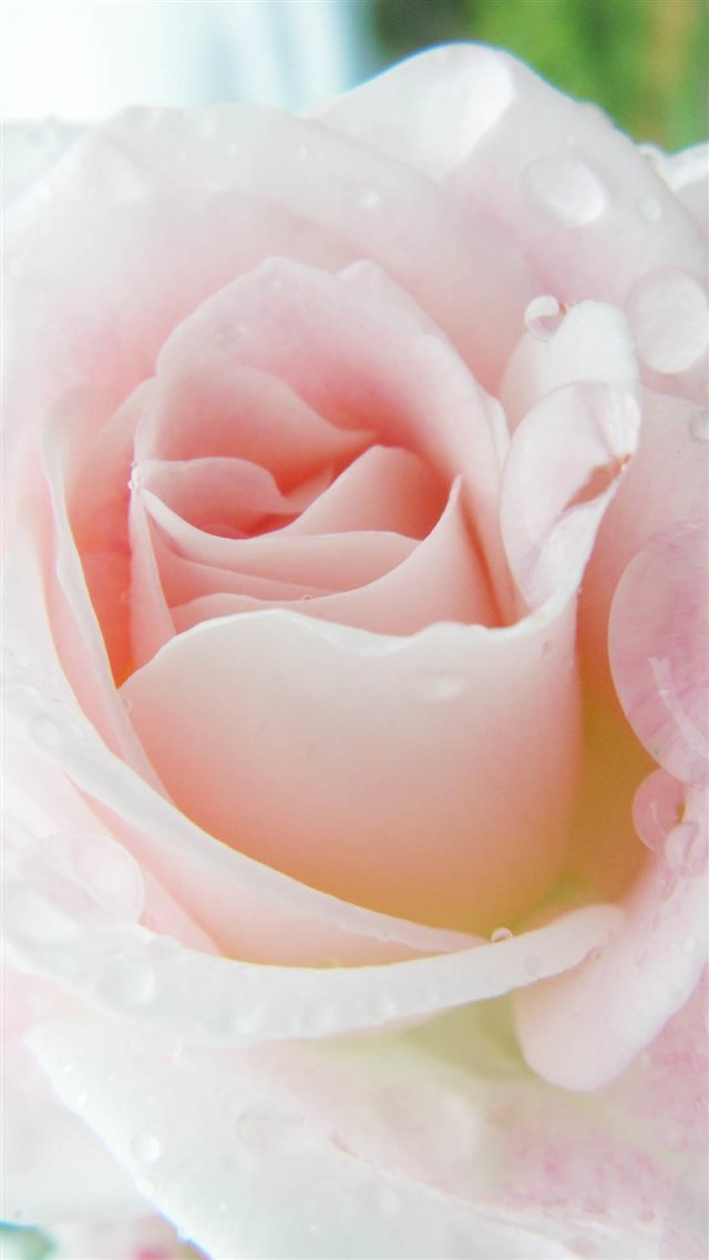 Bright Pink Rose Macro iPhone 8 wallpaper