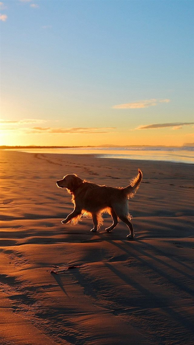 Lonely Walking Dog Sea Beach iPhone 8 wallpaper