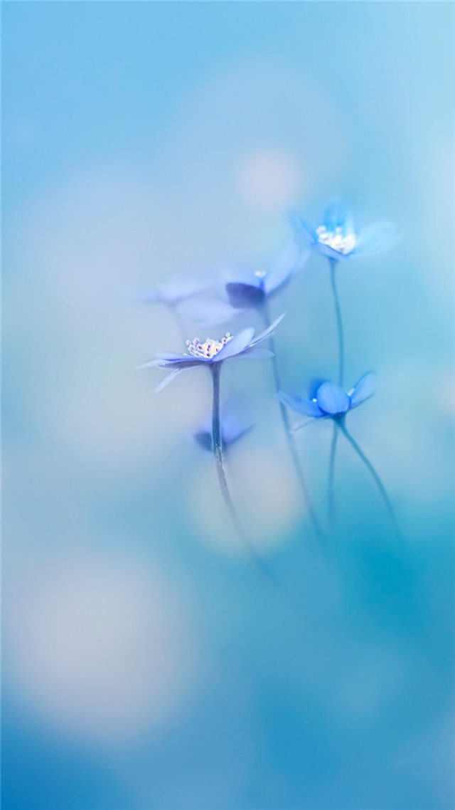 Simple Little Flowers Bokeh Blury iPhone 8 wallpaper