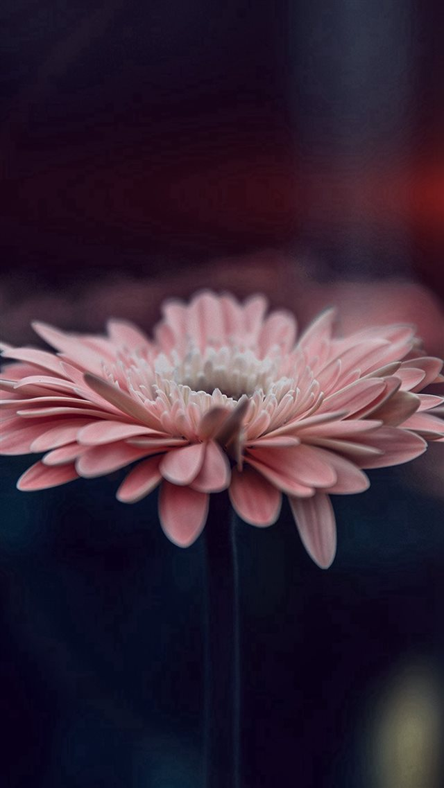 Flower Blue Calm Nature Bokeh iPhone 8 wallpaper
