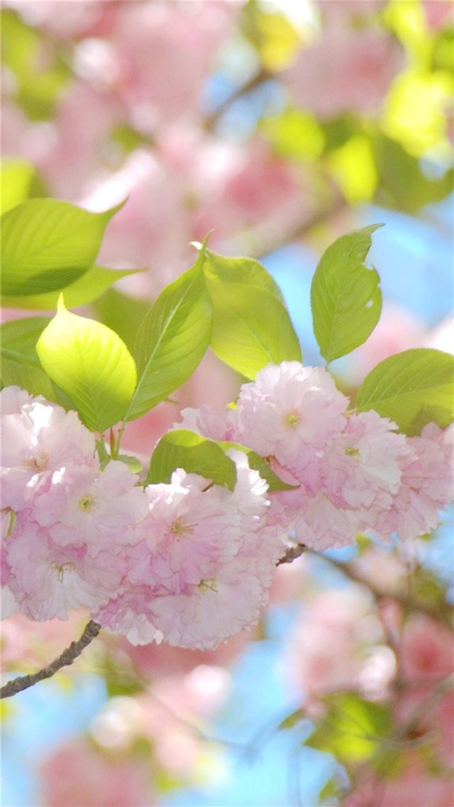 Pure Sunny Beautiful Flowers Branch iPhone 8 wallpaper
