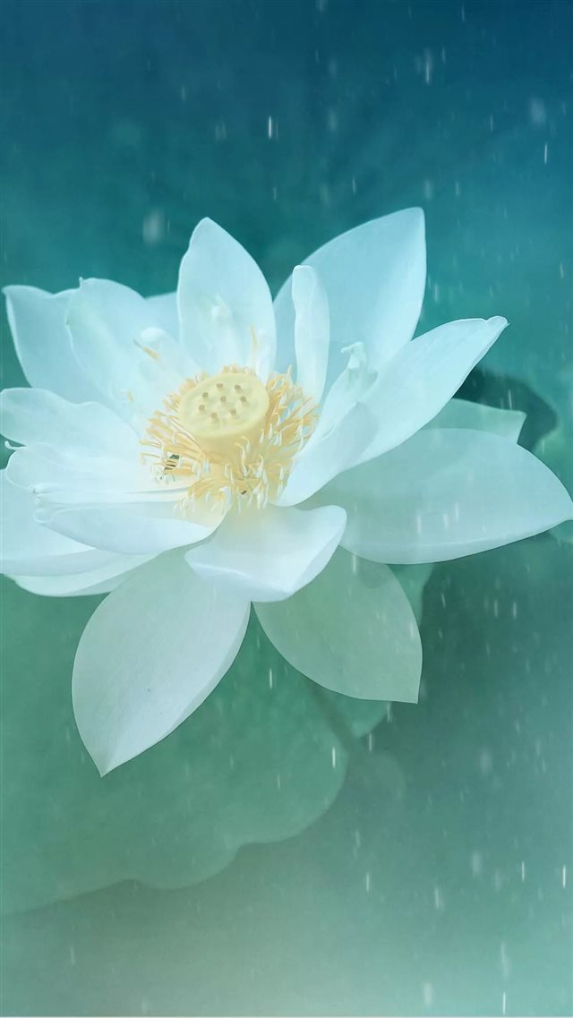 Pure Beautiful Lotus Flower Macro iPhone 8 wallpaper