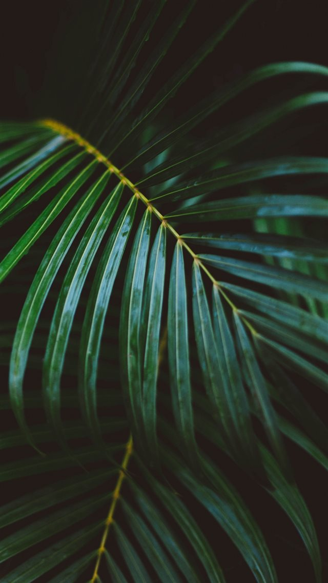 Palm Frond Leafy Branch iPhone 8 wallpaper