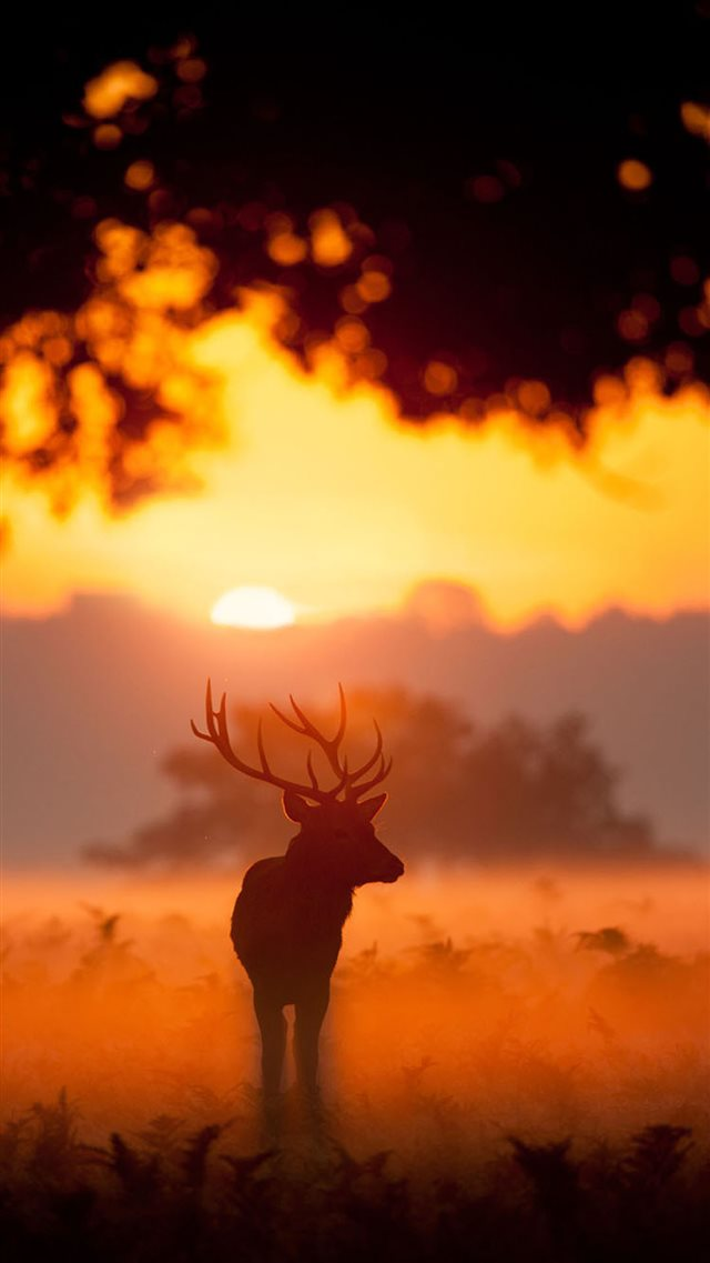 Elk Animal Wandering Sunset Grassland iPhone 8 wallpaper