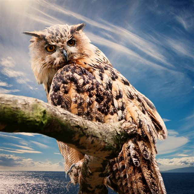 Owl Predator Bird Sky iPad wallpaper