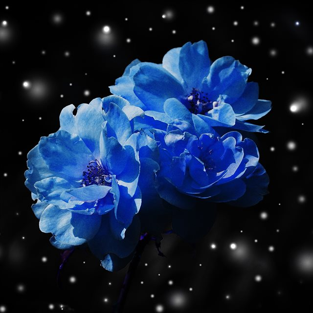 Flower Blue Snow Nature Art iPad wallpaper