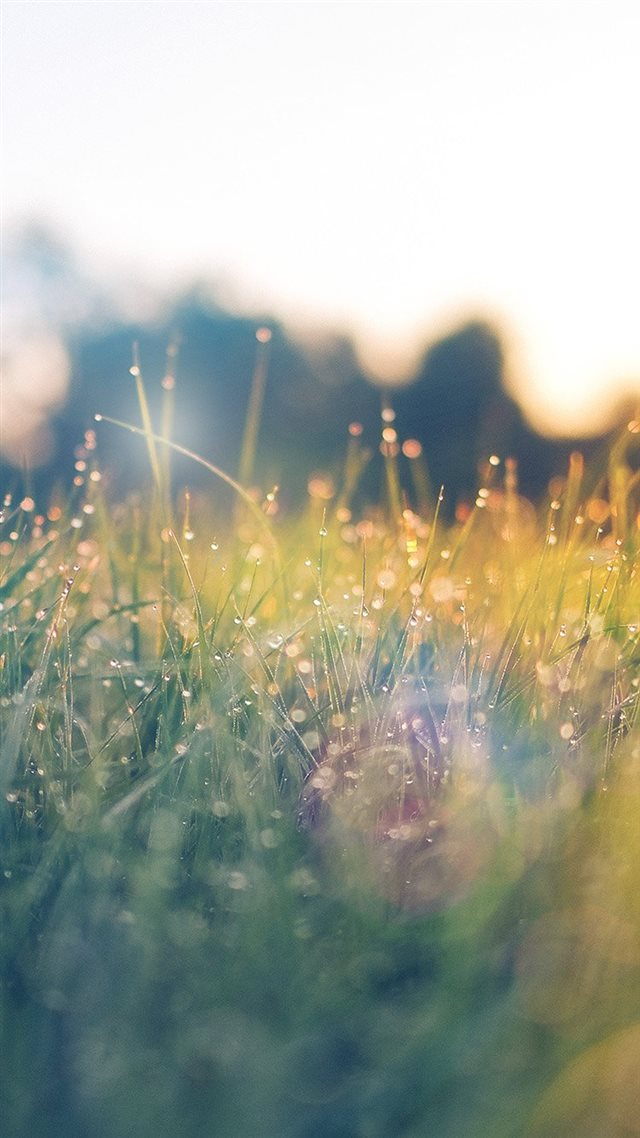 Lawn Green Nature Sunset Light Bokeh Spring Flare Happy iPhone 8 wallpaper