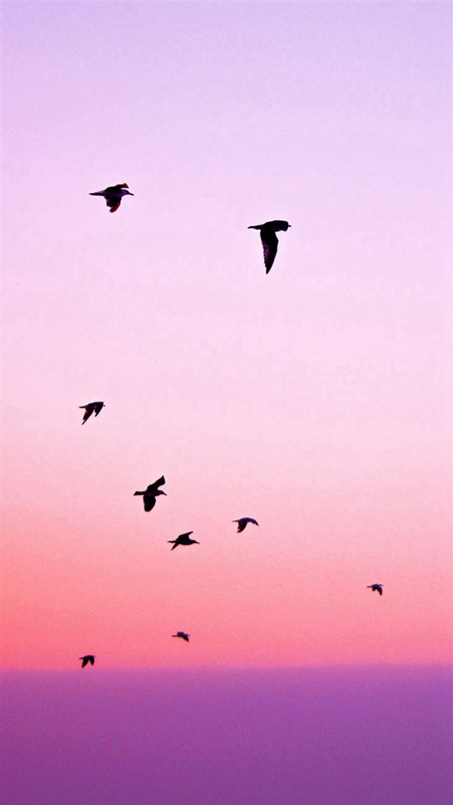 Birds Flying In Purple Sunset iPhone 8 wallpaper