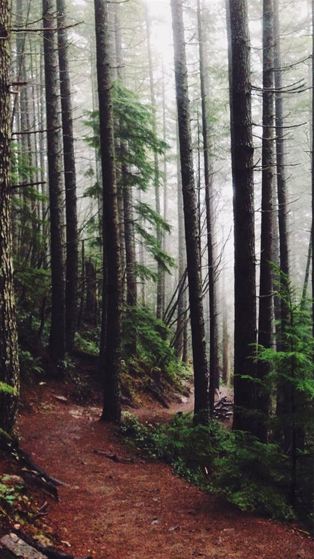 Forest Woods Path Pine Trees iPhone 8 wallpaper