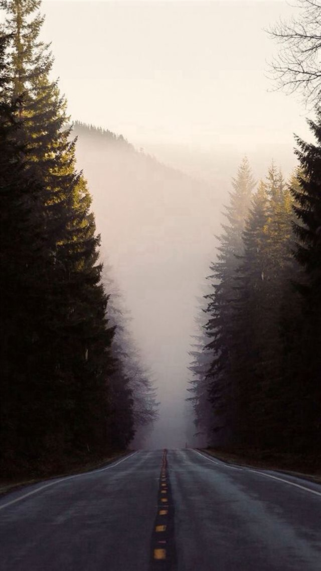 Misty Forest Road Pine Trees iPhone 8 wallpaper