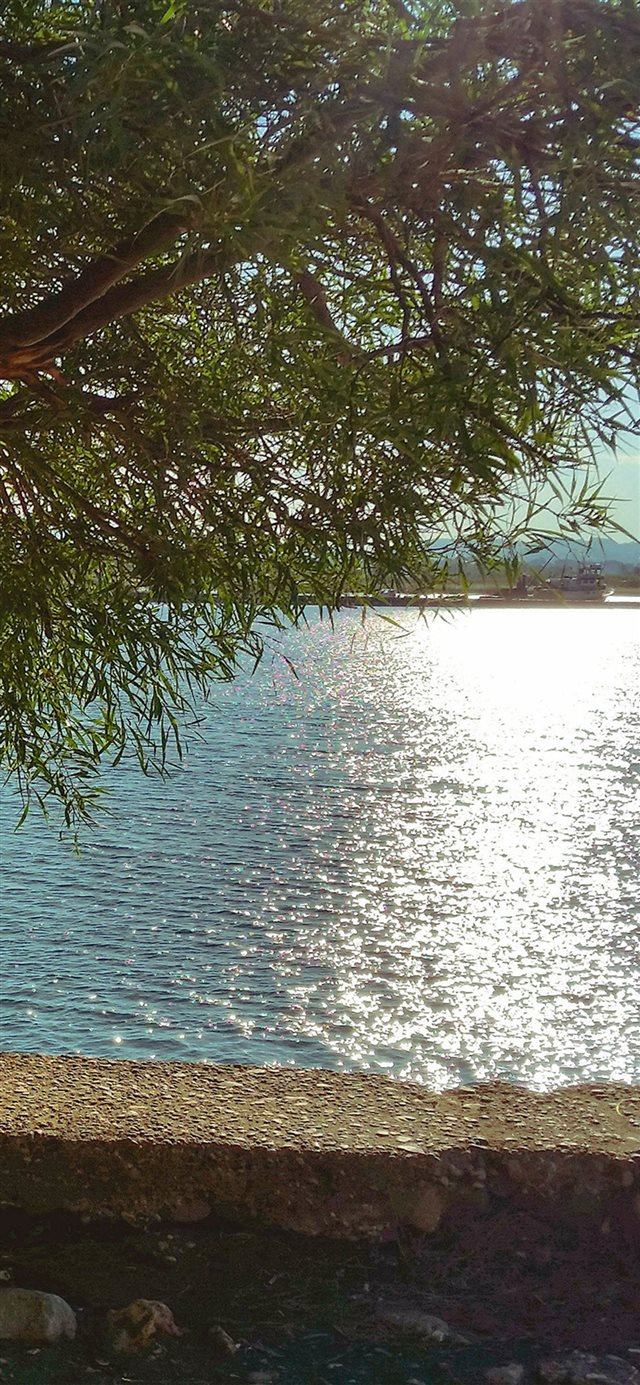 Summer Lake View Tree Sunshine Nature iPhone X wallpaper