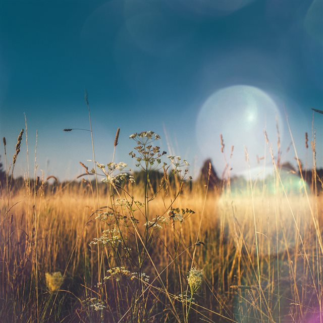 Fall Field Nature Flower Reed Sunny Flare iPad wallpaper
