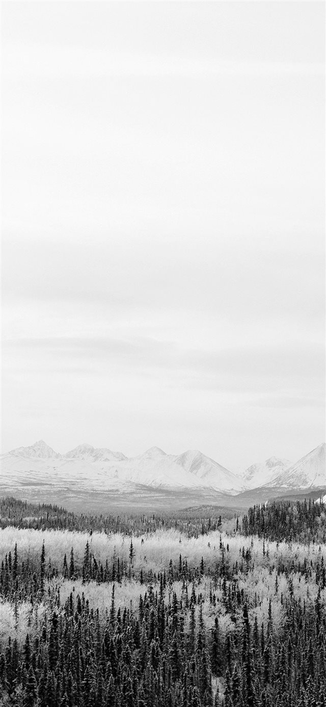 Winter Mountain Wood Nature Snow Bw iPhone 11 wallpaper