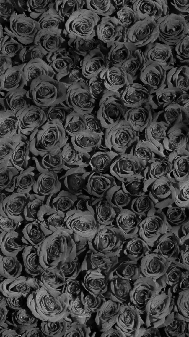 Rose Dark Bw Pattern Background iPhone 8 wallpaper