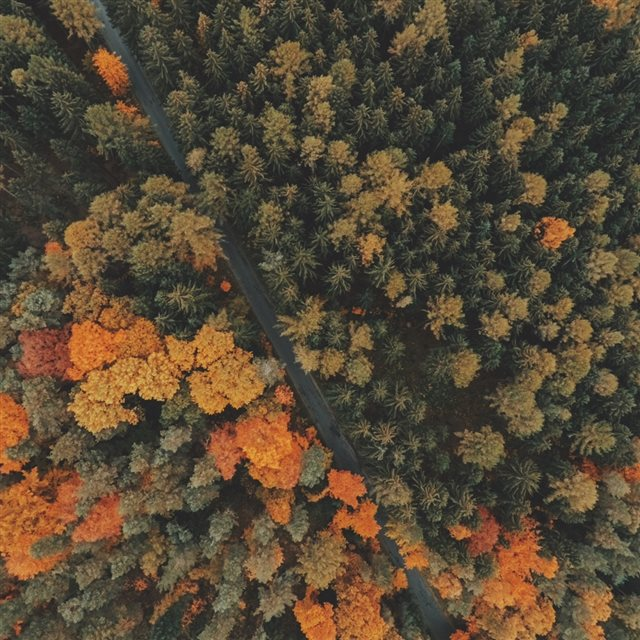 Forest Trees Top View iPad wallpaper