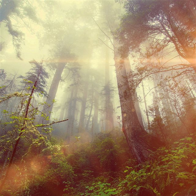 Forest Wood Fog Flare Red Nature Green iPad Pro wallpaper