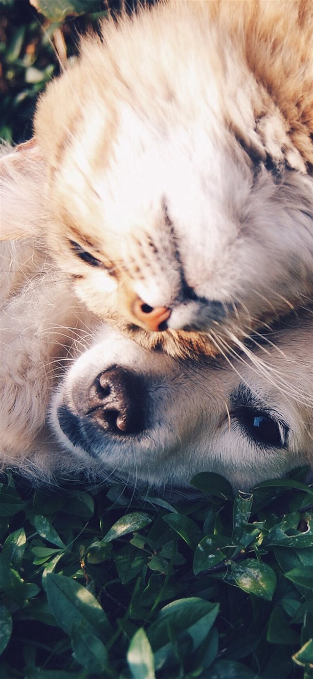 Cat And Dog Animal Love Nature Pure iPhone X wallpaper
