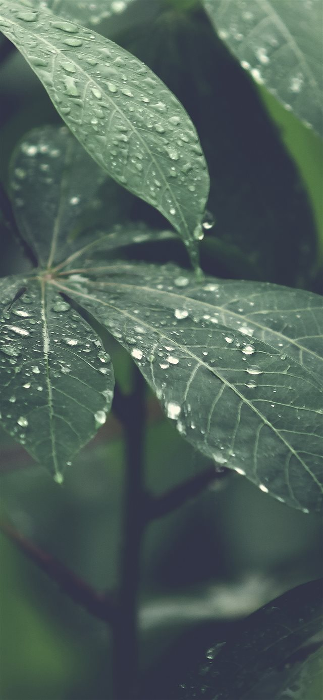 Rain Forest Wood Leaf Flower Nature iPhone X wallpaper
