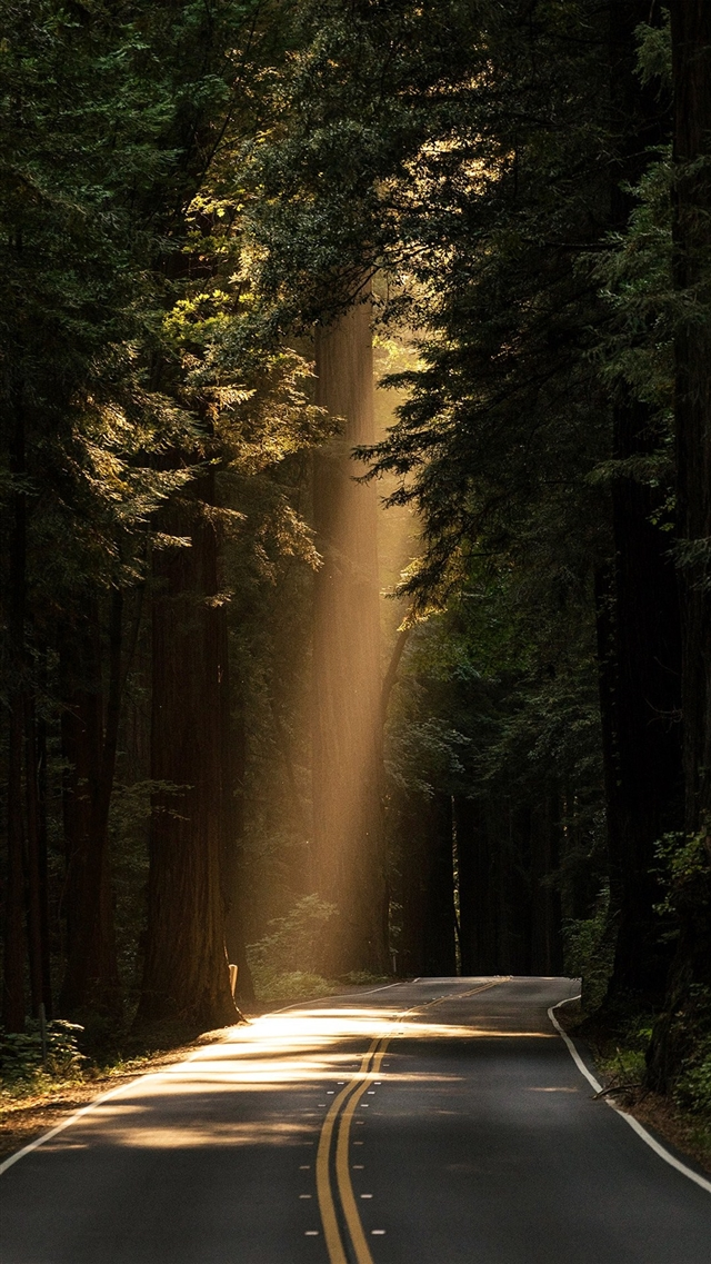 Light road forest iPhone 8 wallpaper