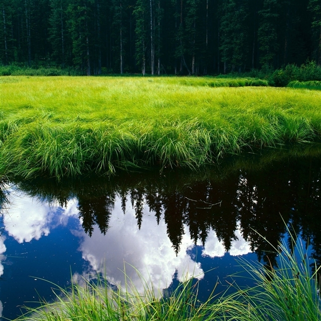 Grass reflection pond iPad Pro wallpaper
