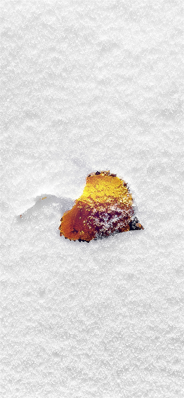 Snow leaf iPhone X wallpaper