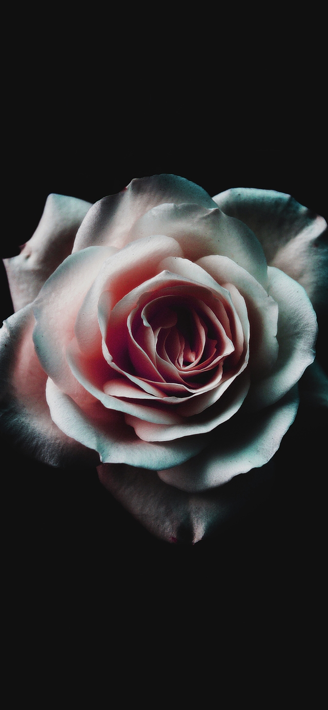 Flower white dark iPhone X wallpaper